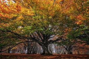 BURLOIU CIPRIAN l'albero della vita